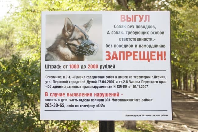 Куда жаловаться, если собаку выгуливают без намордника