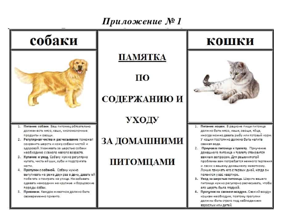 Правила содержания собак и кошек в городах