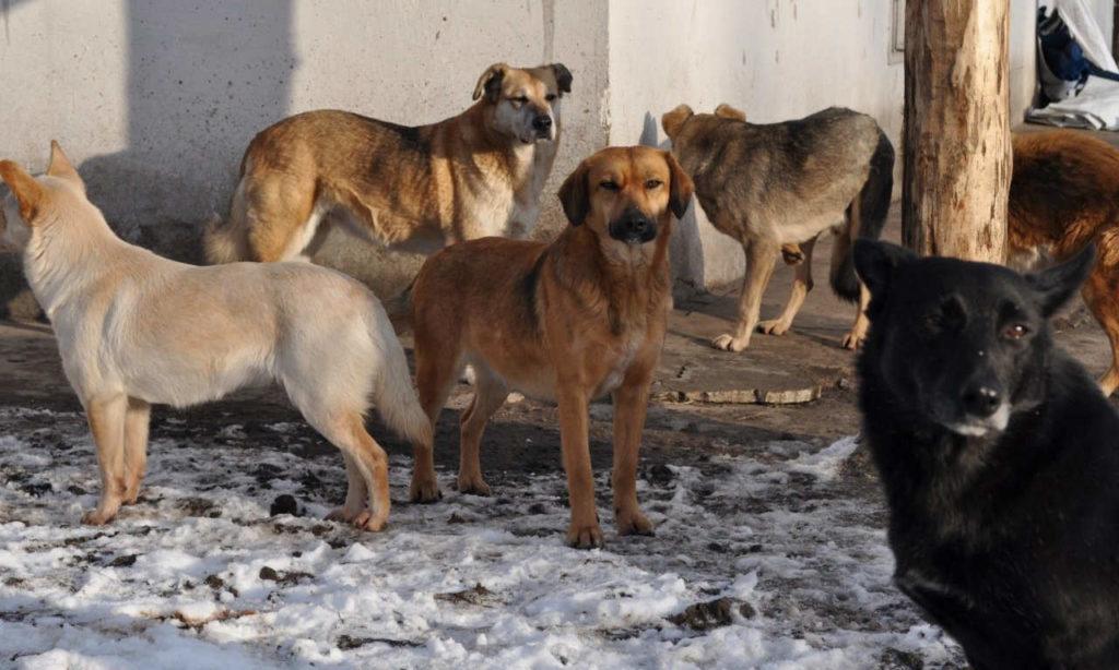 Бродячие собаки - в какие организации обращаться?